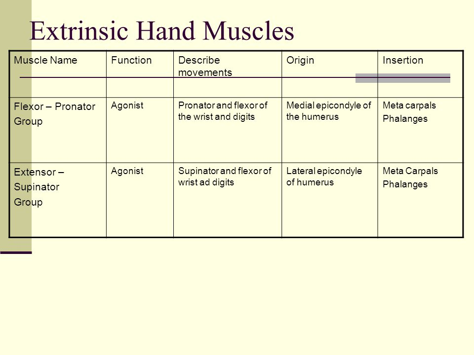 Muscles Origins and Insertions - ppt video online download
