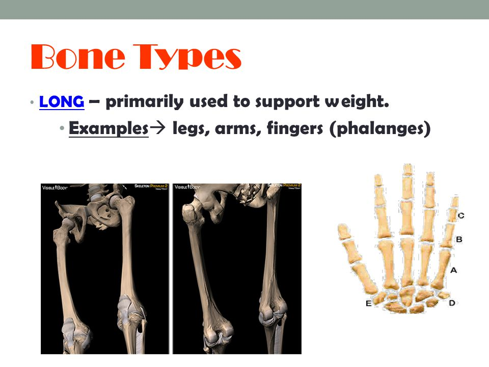 Bone Types Examples legs, arms, fingers (phalanges)