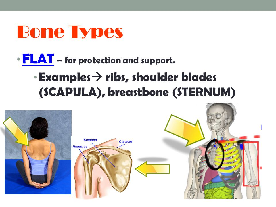 Bone Types FLAT – for protection and support.