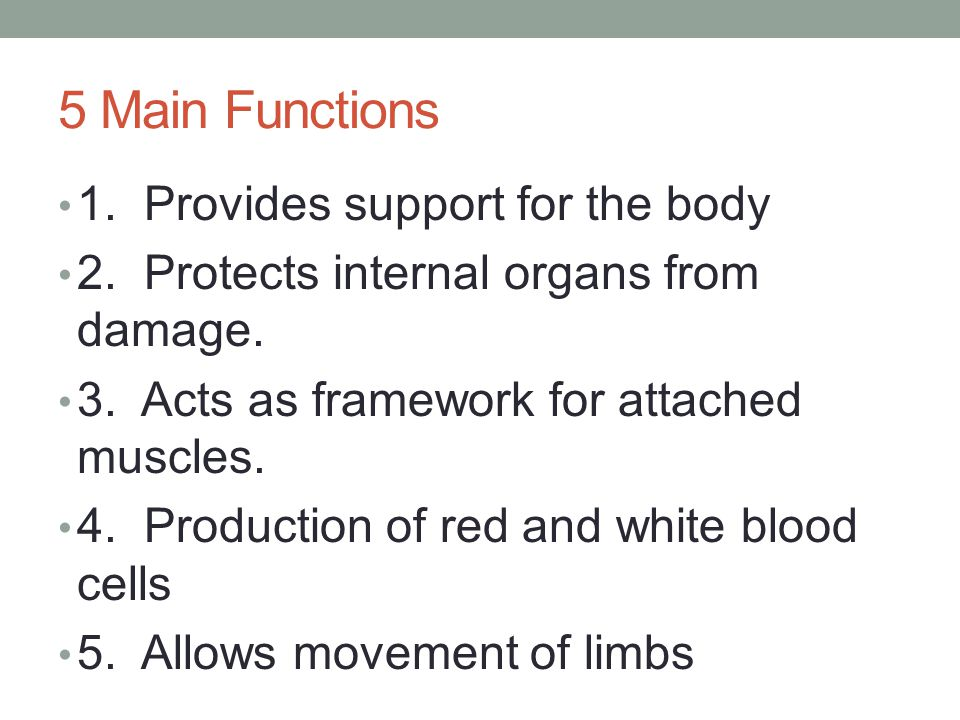 5 Main Functions 1. Provides support for the body