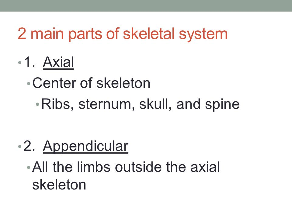 2 main parts of skeletal system