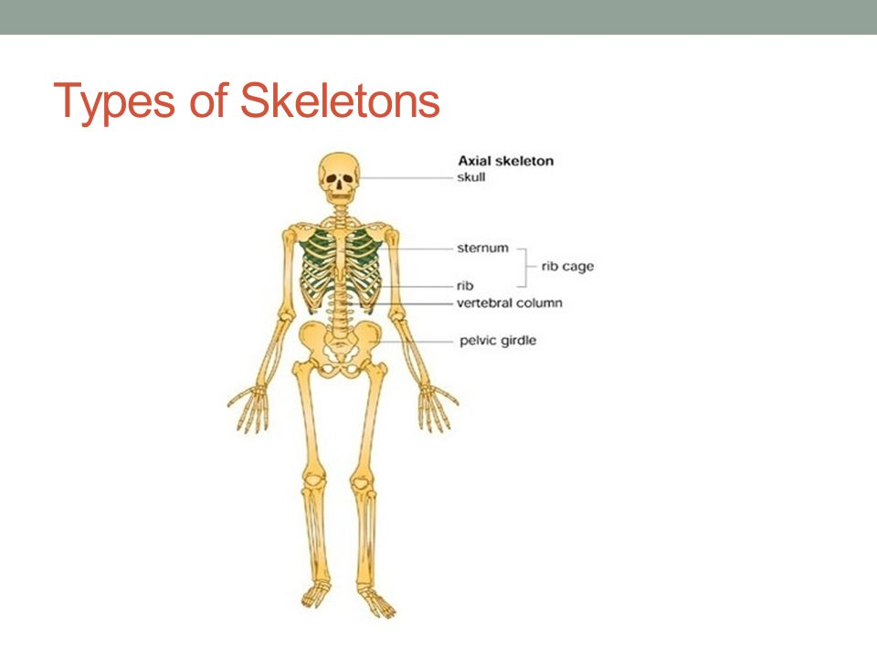 Types of Skeletons