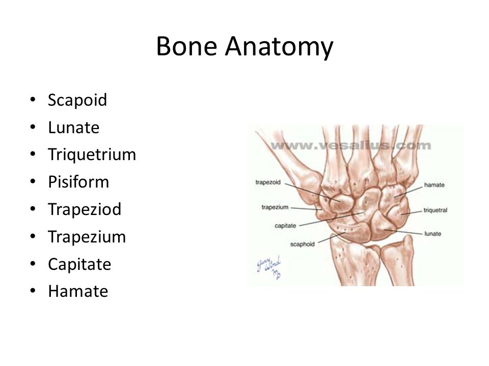 Wrist and Hand Anatomy. - ppt video online download