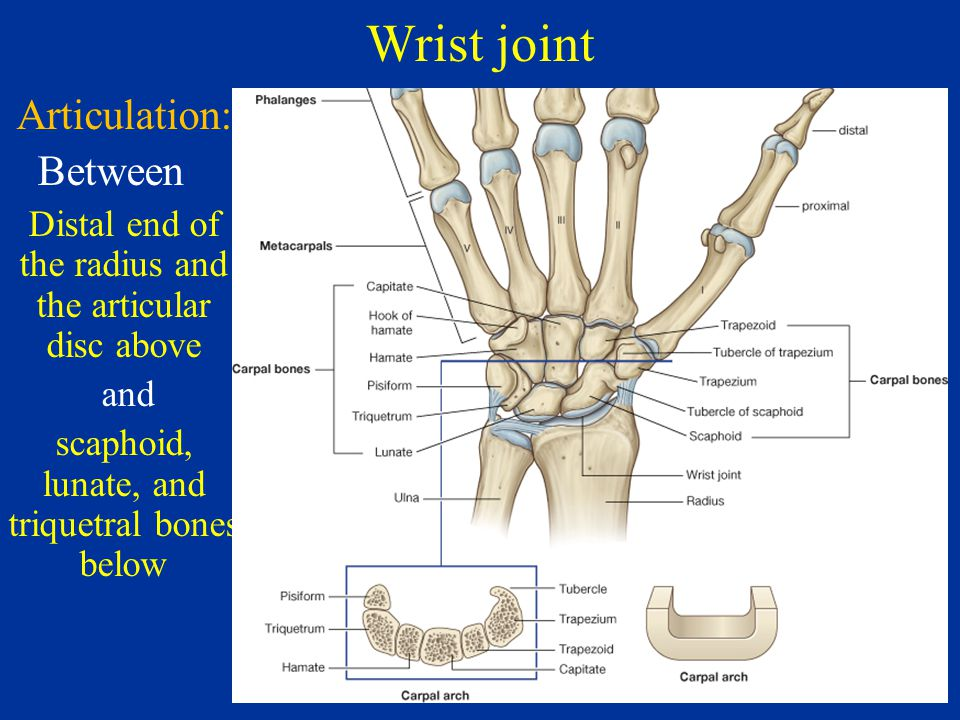Wrist Joint Radio Carpal Joint And Hand Dr Sama Ul Haque Ppt