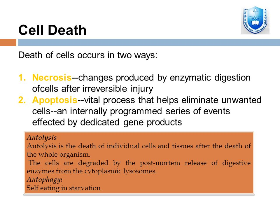 Necrosis and apoptosis - ppt video online download