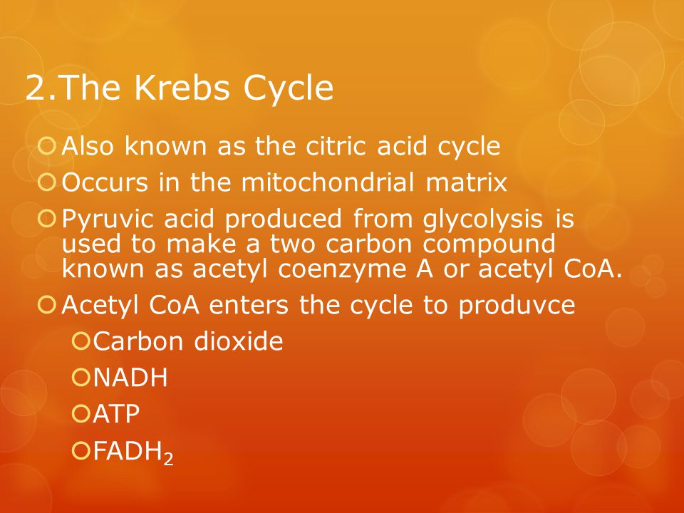 2.The Krebs Cycle Also known as the citric acid cycle