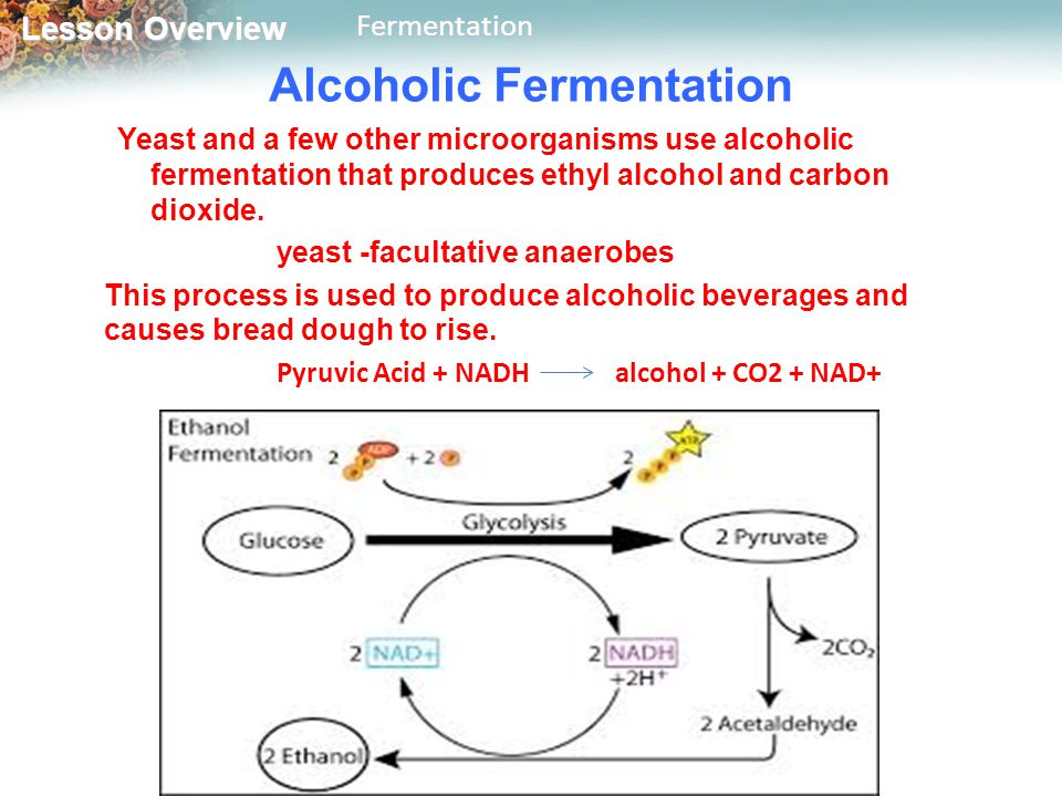 yeast fermentation coursework The rate of fermentation is influenced by several factors like temperature, type of sugar solution, concentration of yeast and concentration of glucose in order to measure the rate of fermentation, the rate of production of carbon dioxide is measured in this experiment.