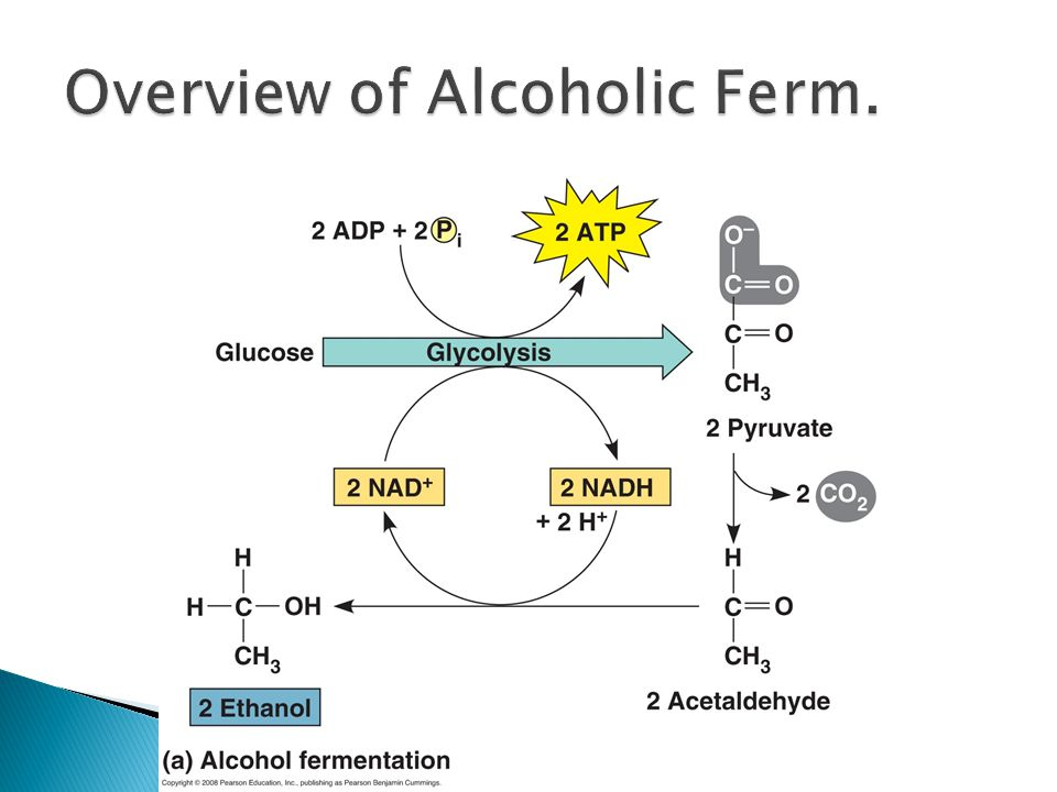 Overview of Alcoholic Ferm.