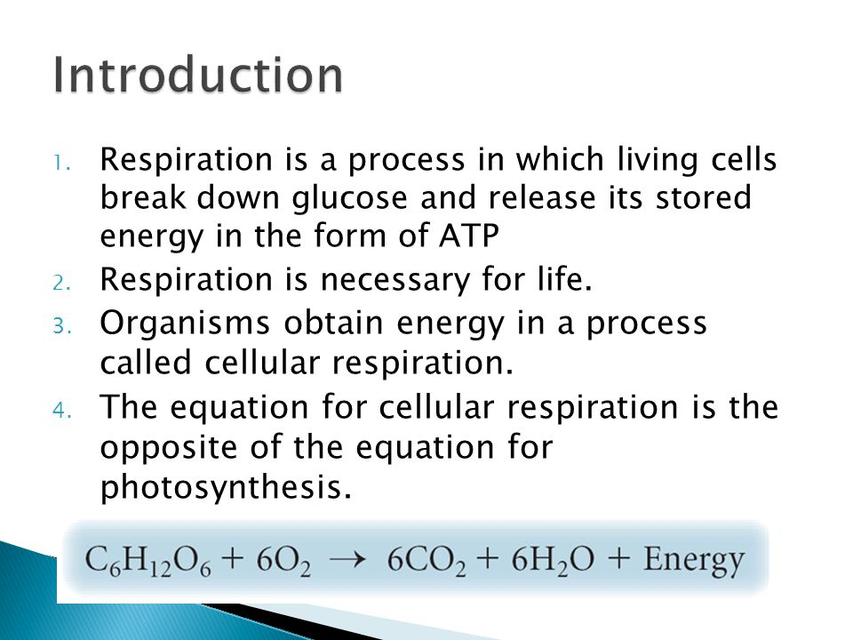 Introduction Respiration is a process in which living cells break down glucose and release its stored energy in the form of ATP.