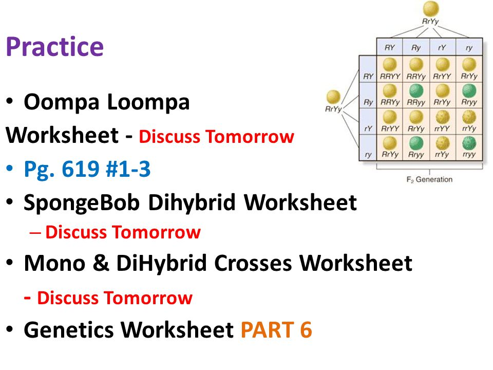 Patterns And Processes In Inheritance Ppt Video Online Download. Practice Oompa Loompa Worksheet Discuss Tomorrow Pg 619 13. Worksheet. Spongebob Dihybrid Crosses Worksheet Answers At Mspartners.co