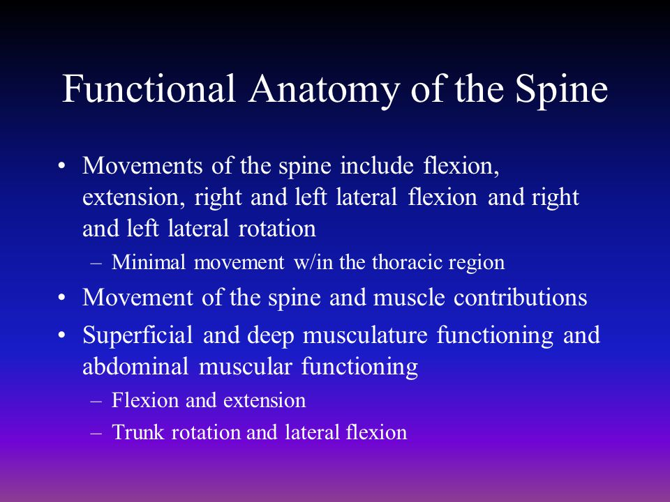 Chapter 25: The Spine. - ppt download