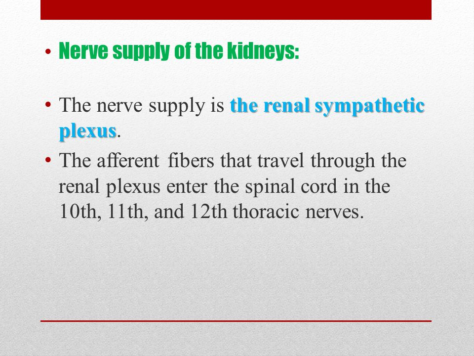 Nerve supply of the kidneys: