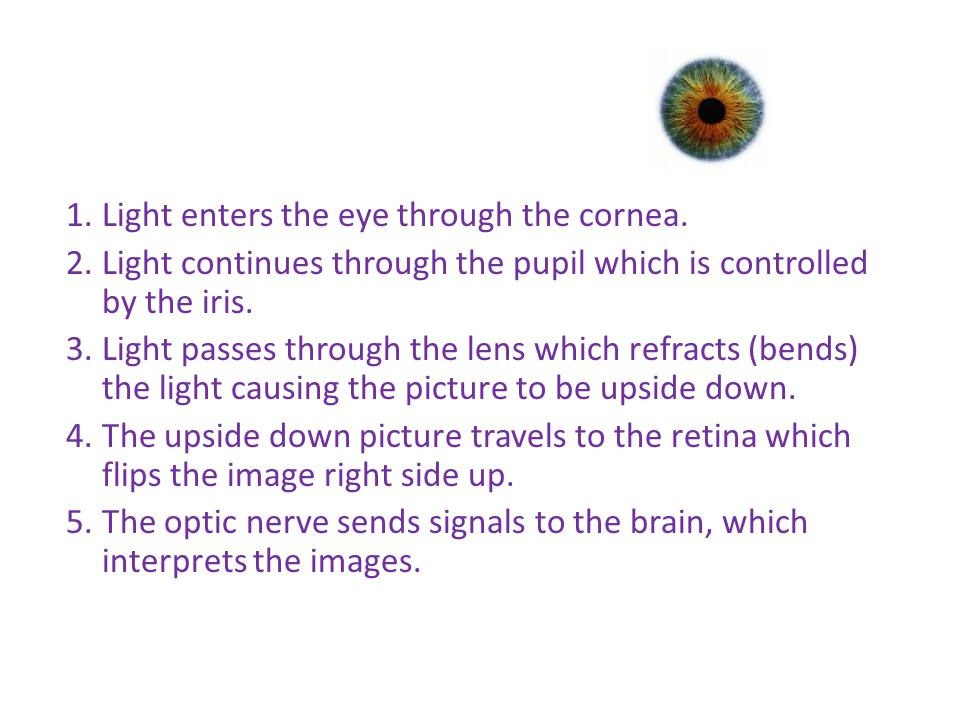 How do we see 1. Light enters the eye through the cornea.