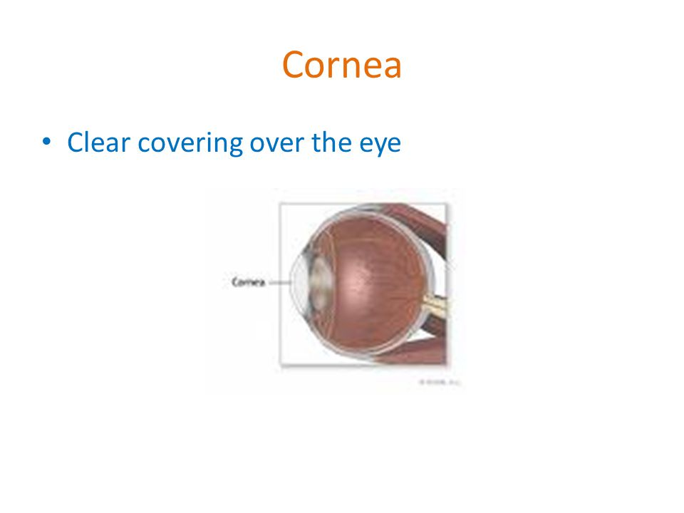 Cornea Clear covering over the eye