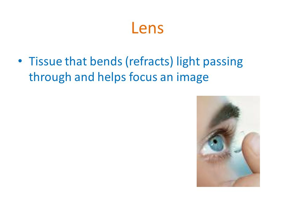 Lens Tissue that bends (refracts) light passing through and helps focus an image