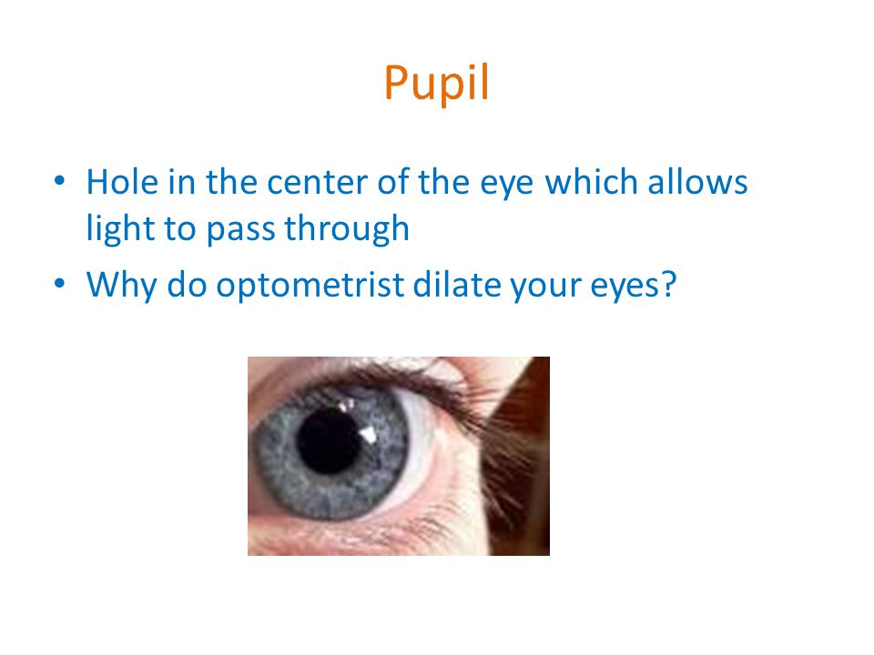 Pupil Hole in the center of the eye which allows light to pass through