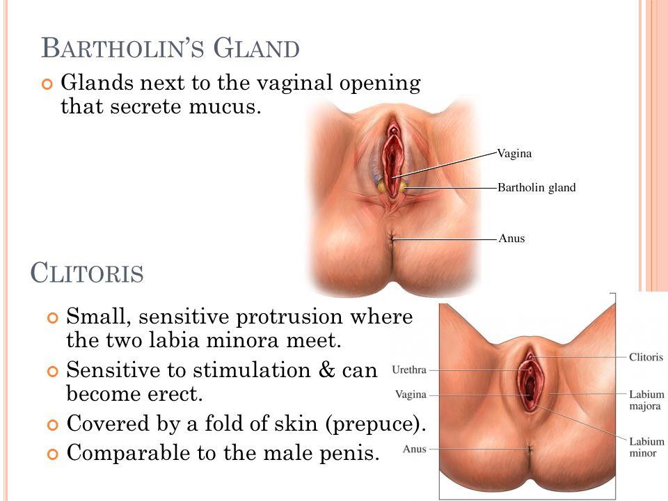 Estradiol oral