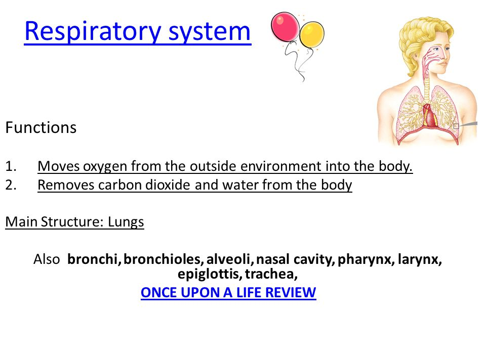 Respiratory system Functions