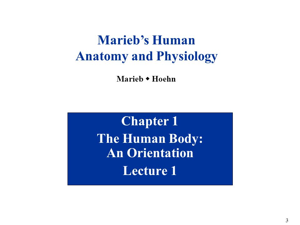 Welcome to Biology 101 Human Anatomy & Physiology I - ppt download