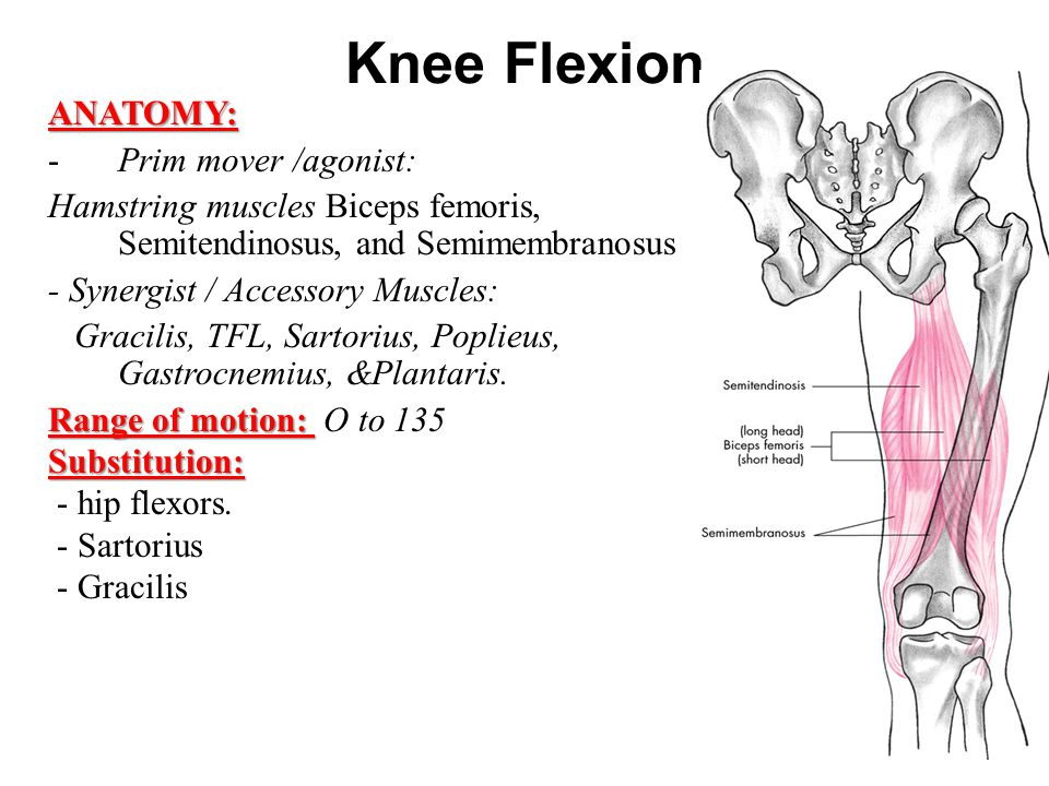 Knee and Ankle Mazyad Alotaibi. - ppt video online download