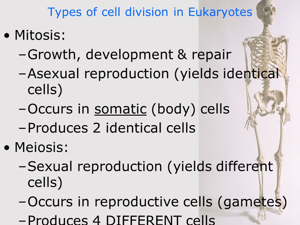 Two main types of cell division in asexual reproduction