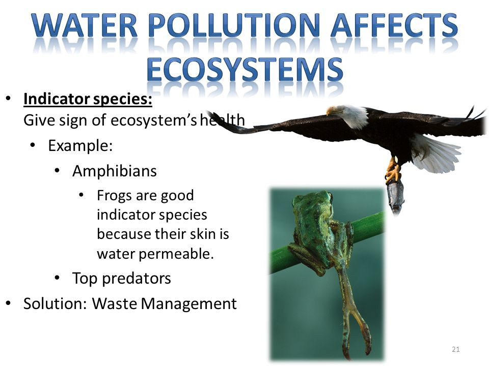 Water pollution affects ecosystems
