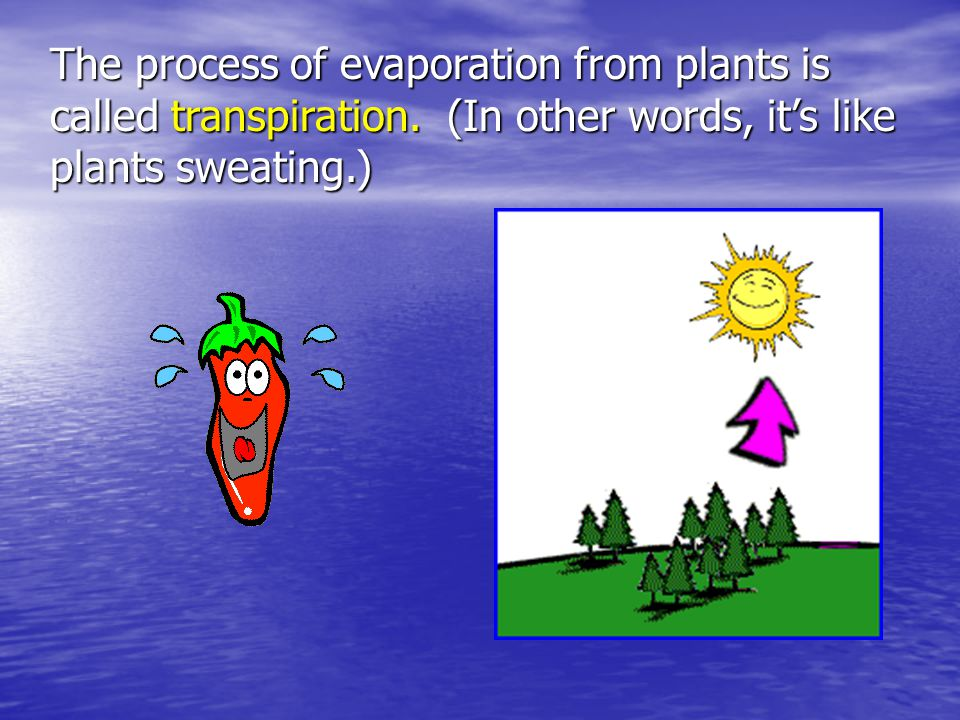 The process of evaporation from plants is called transpiration