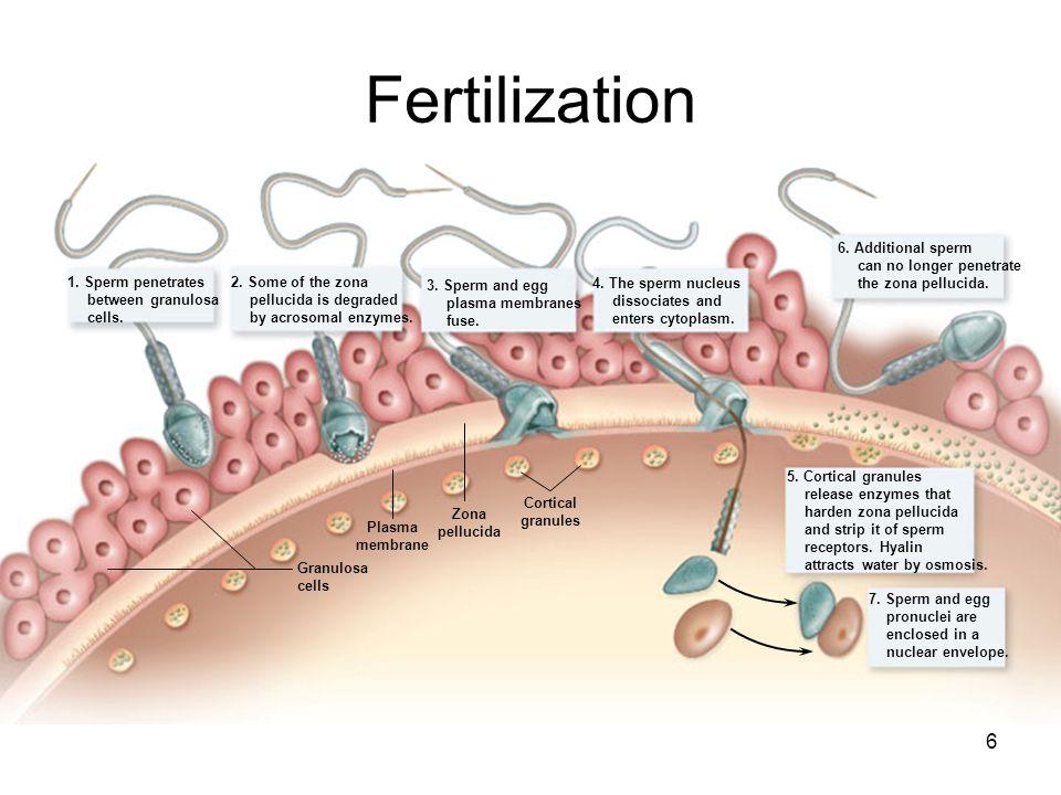 Human Sperm Rna Code Senses Dietary Sugar