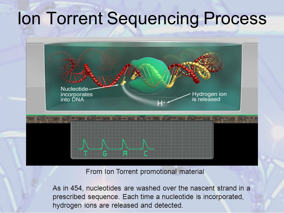 High throughput sequencing technologies ppt video online download ion torrent sequencing process fandeluxe Choice Image