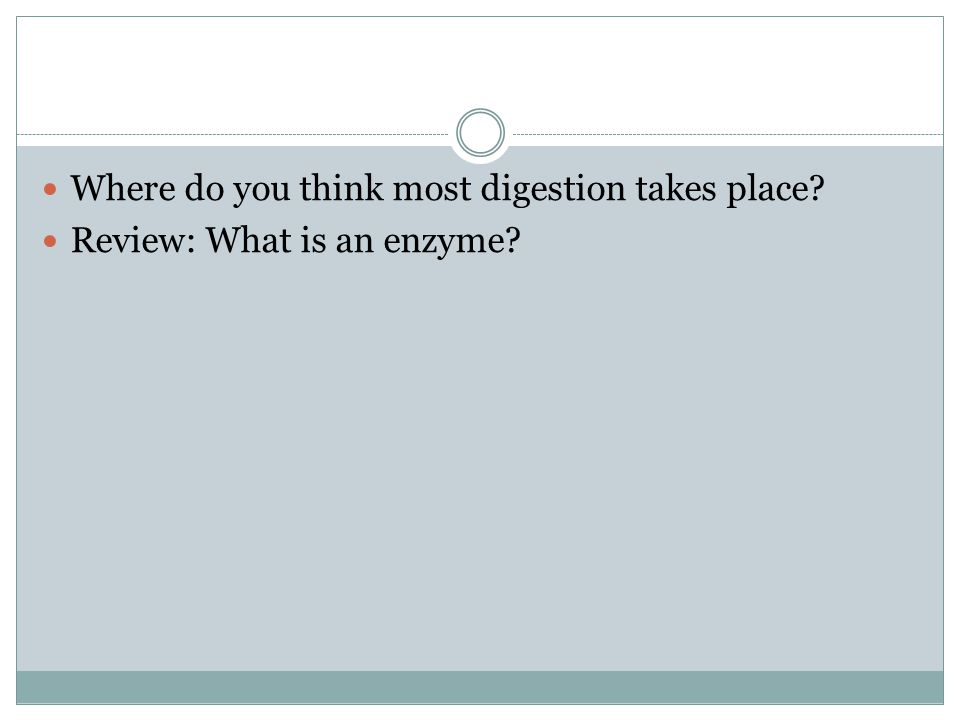 Where do you think most digestion takes place