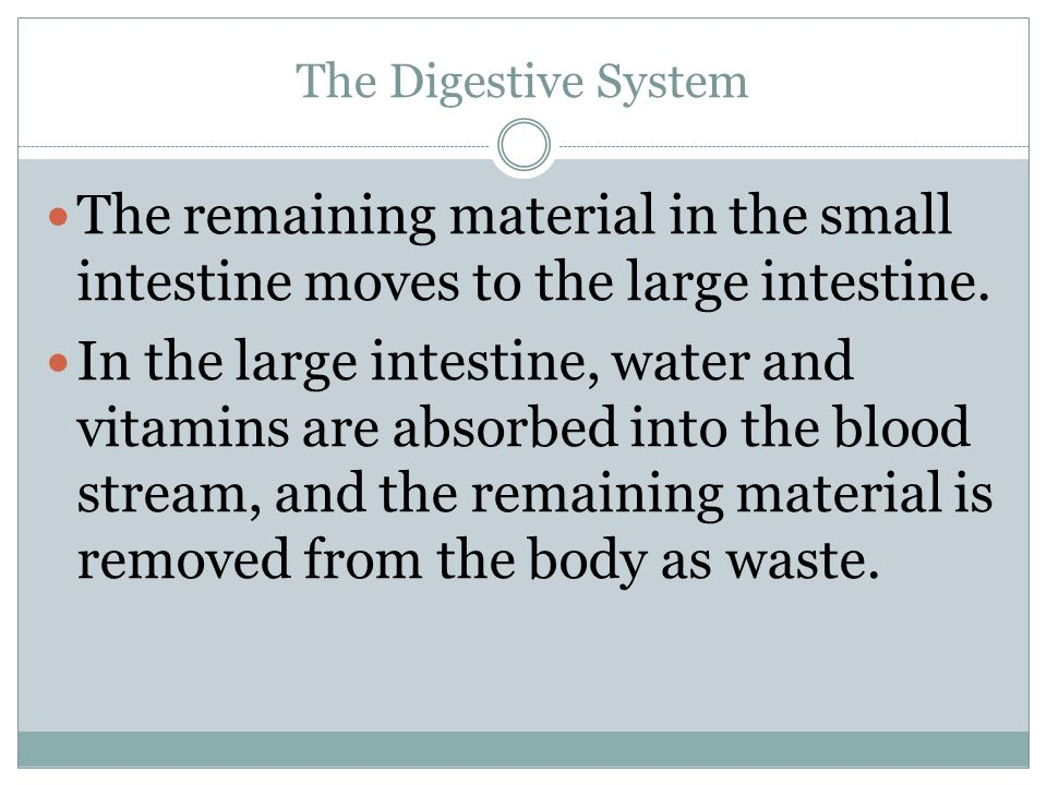 The Digestive System The remaining material in the small intestine moves to the large intestine.
