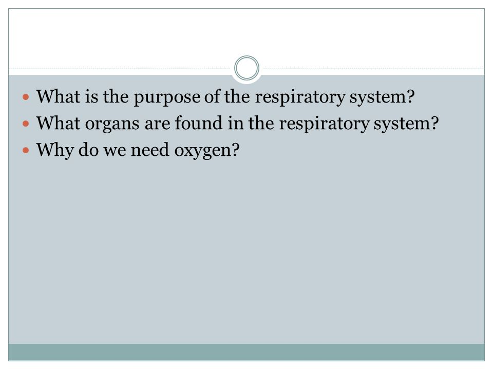 What is the purpose of the respiratory system