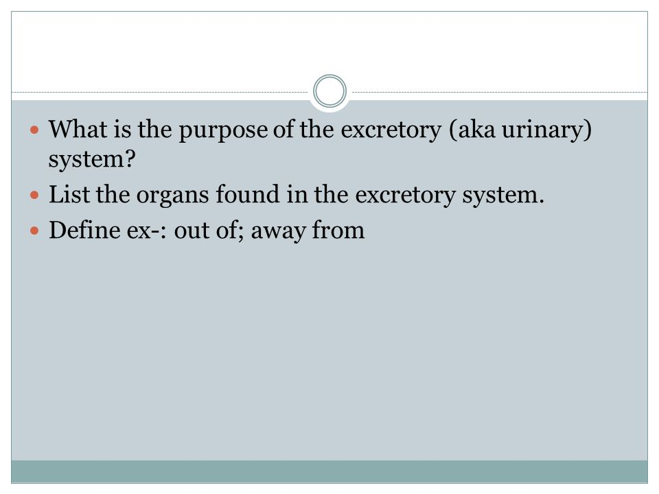 What is the purpose of the excretory (aka urinary) system