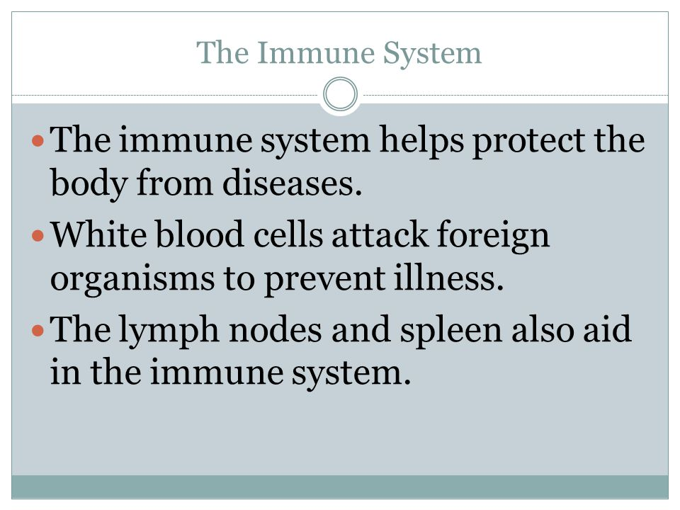 The immune system helps protect the body from diseases.