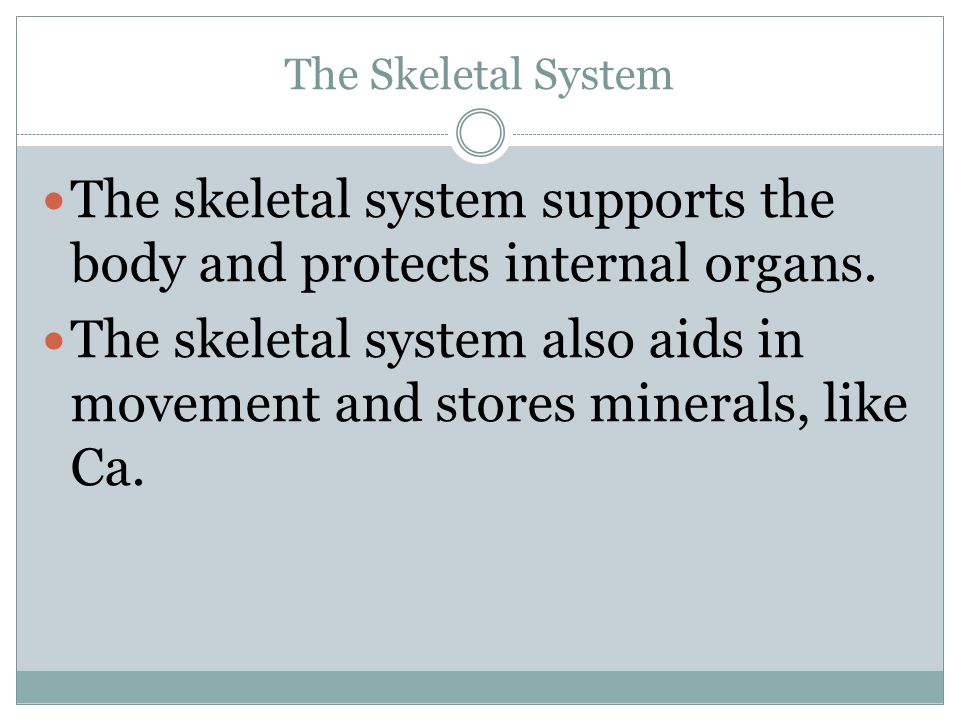 The skeletal system supports the body and protects internal organs.