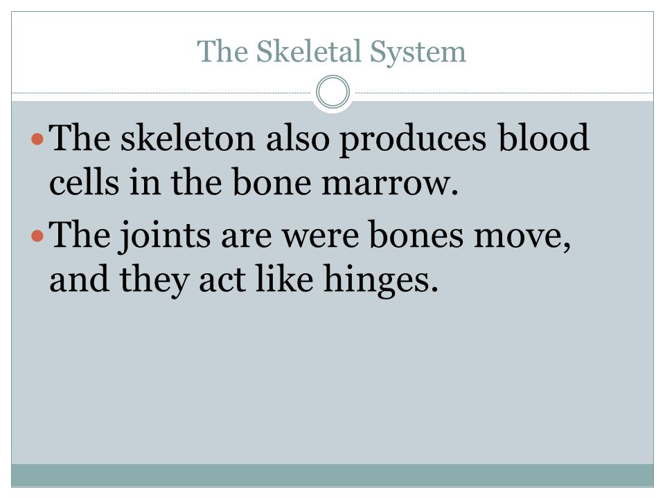 The skeleton also produces blood cells in the bone marrow.