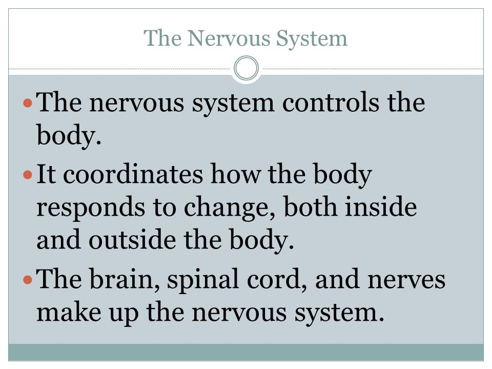 The nervous system controls the body.