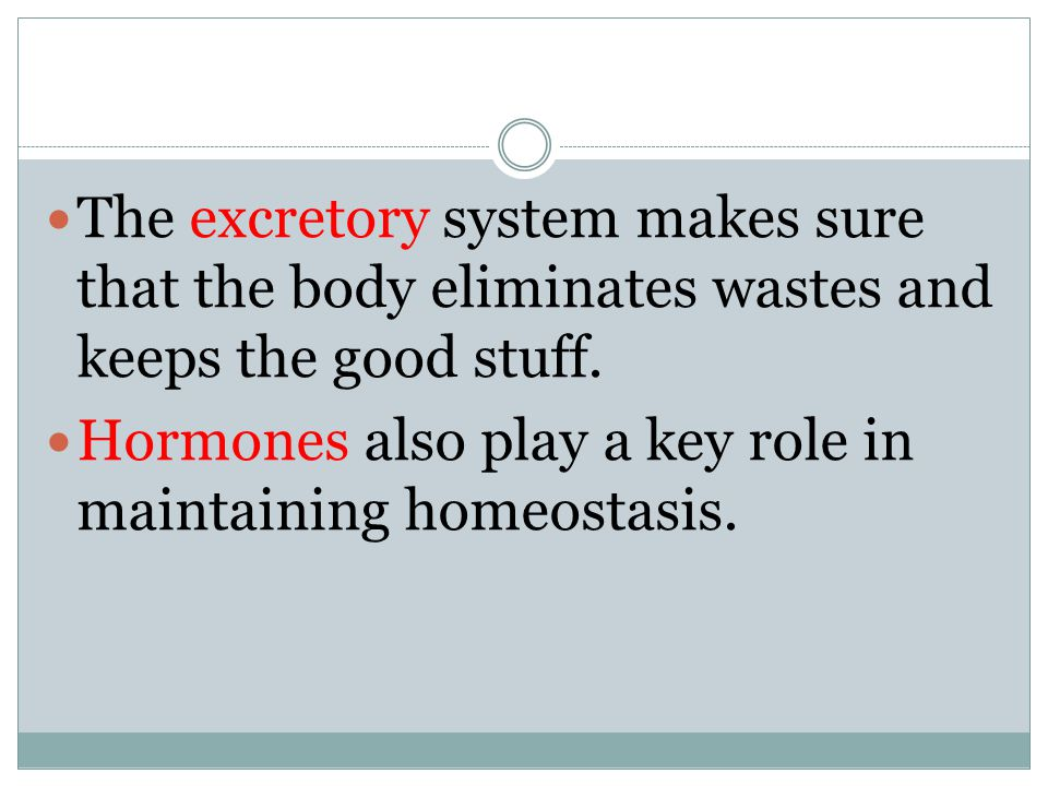 The excretory system makes sure that the body eliminates wastes and keeps the good stuff.