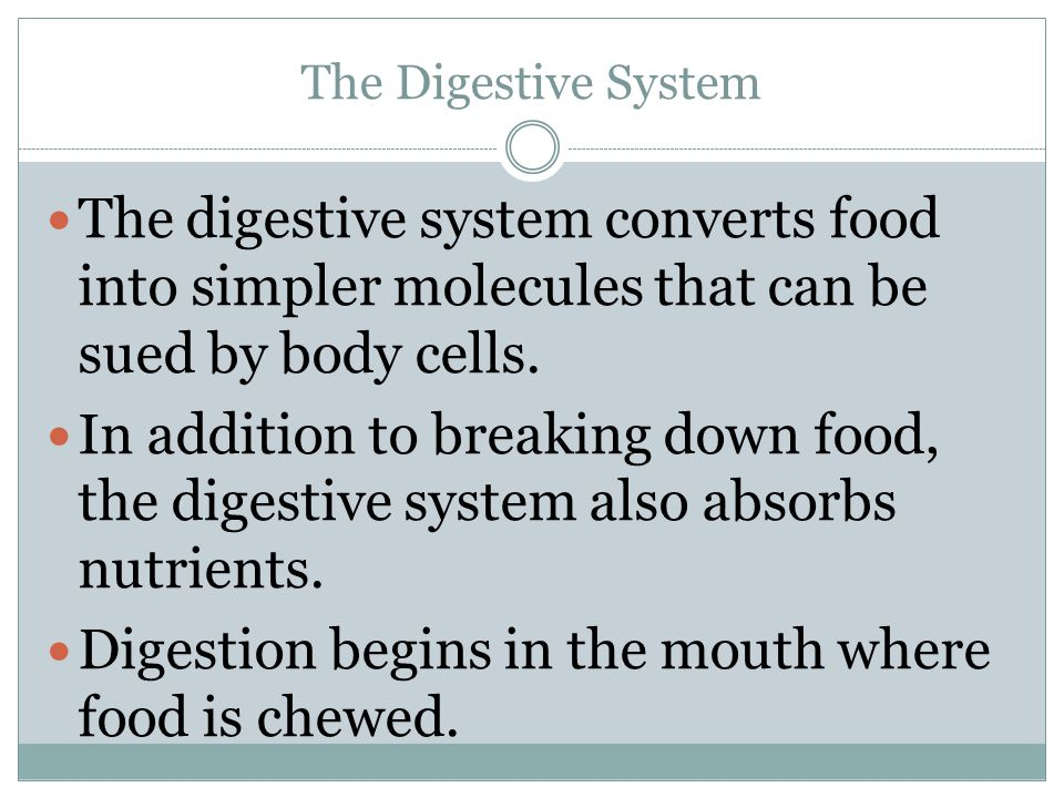 Digestion begins in the mouth where food is chewed.