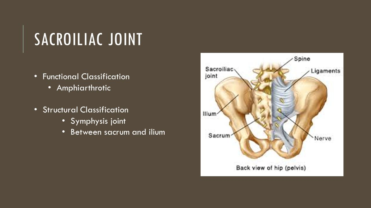 The Spinal Column & SI Joint - ppt video online download