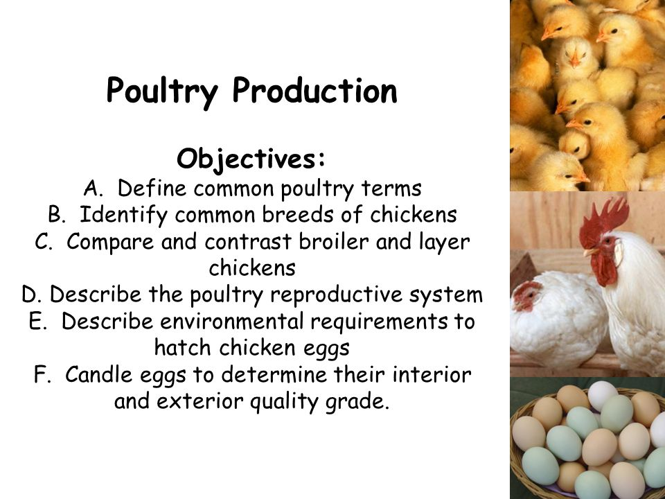 poultry production and management pdf