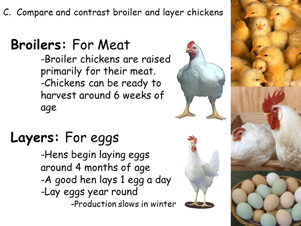 Poultry Production  - ppt video online download