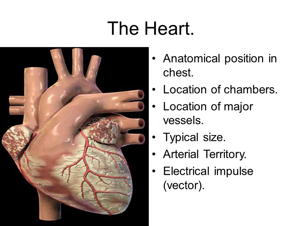 Anatomy and Physiology. - ppt download