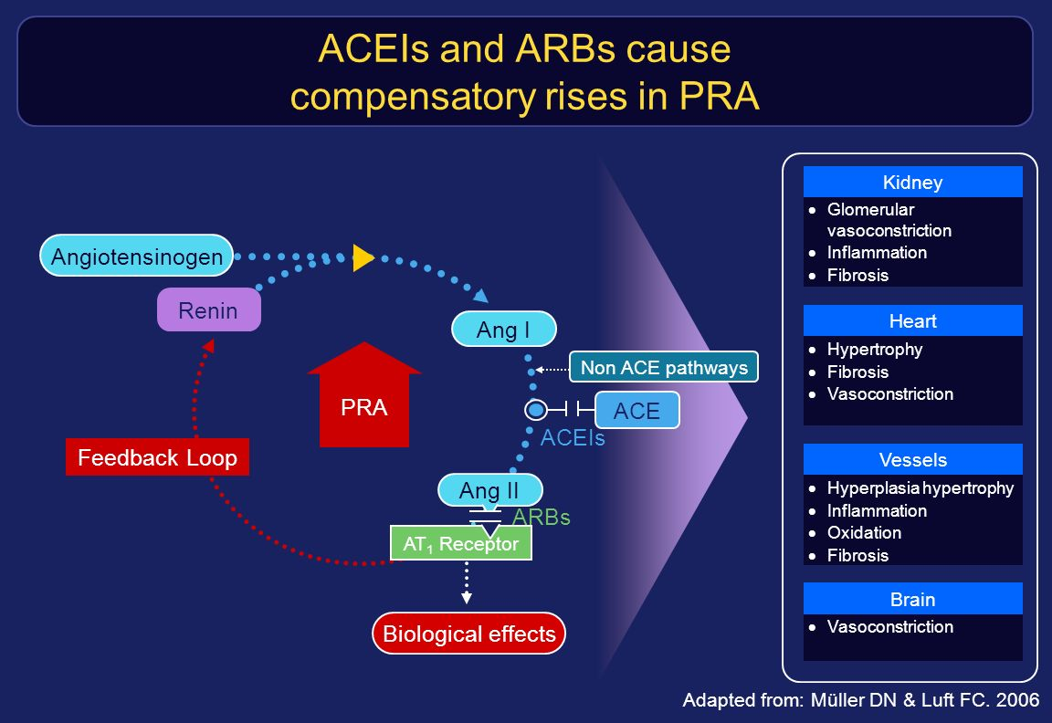 ACEIs and ARBs cause compensatory rises in PRA