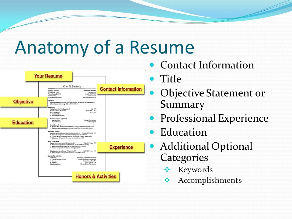 Anatomy of a Resume Contact Information. Title. Objective Statement or Summary. Professional Experience.