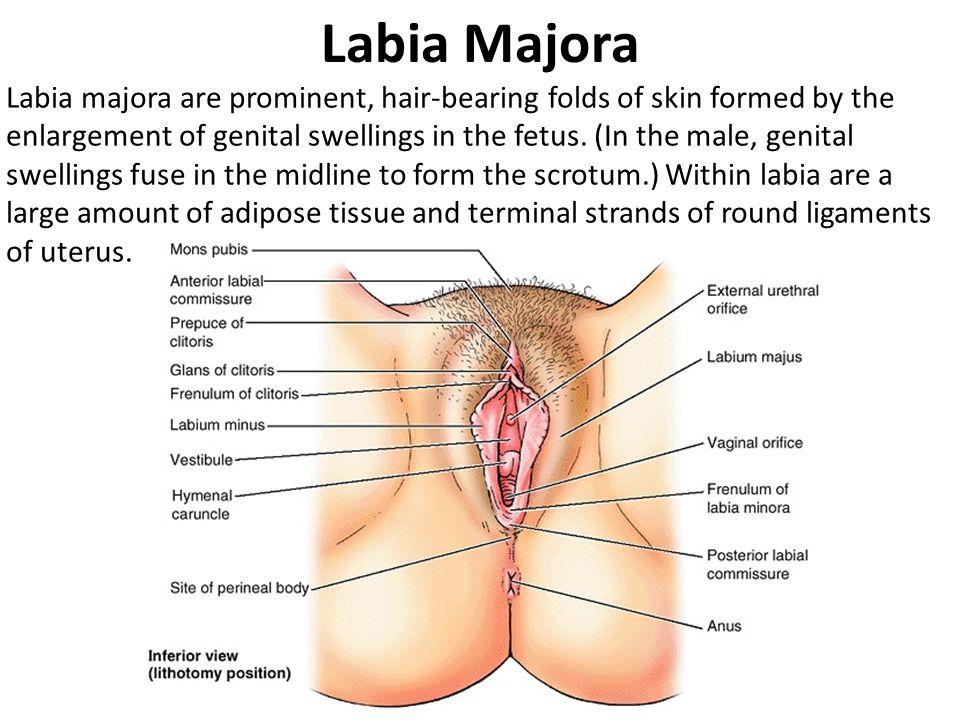 Labiaplasty In Suffolk County