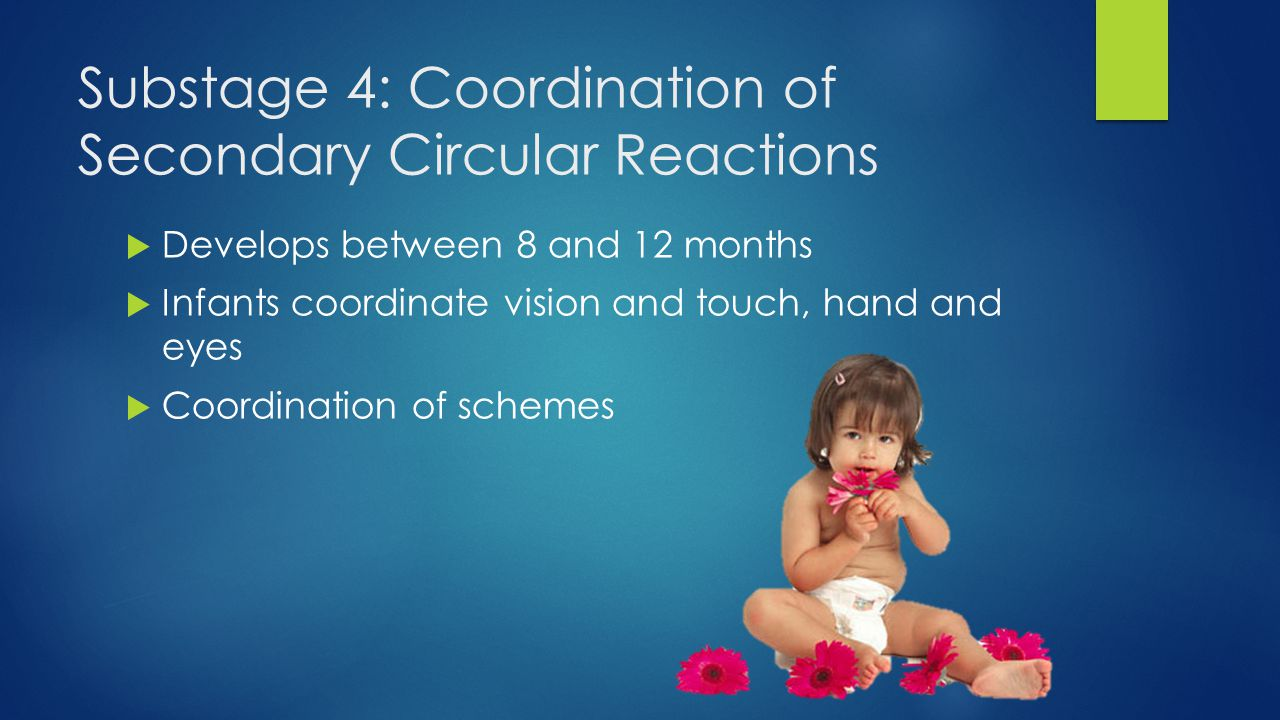 Substage 4: Coordination of Secondary Circular Reactions