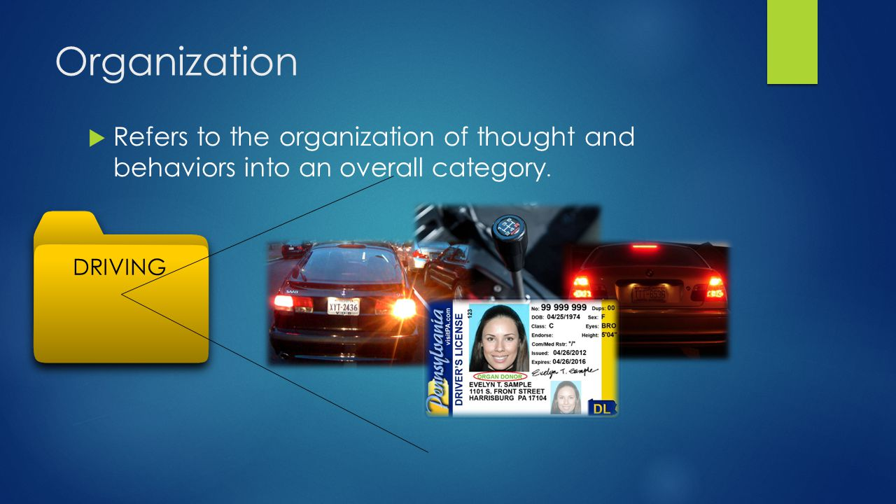 Organization Refers to the organization of thought and behaviors into an overall category. DRIVING