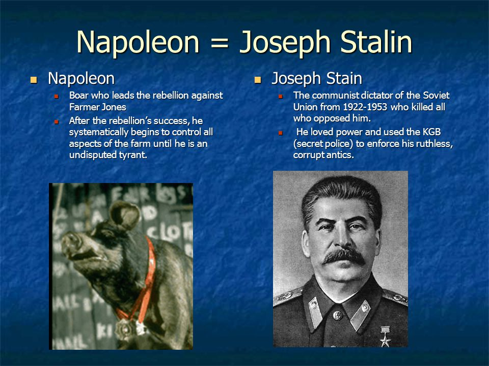 napoleon animal farm stalin