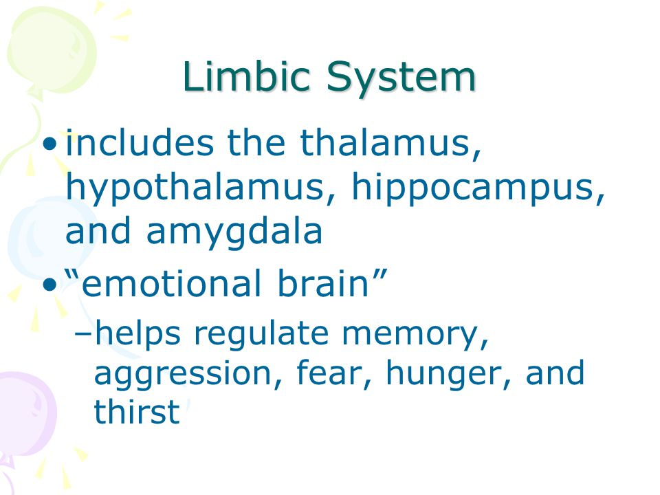 Limbic System includes the thalamus, hypothalamus, hippocampus, and amygdala. emotional brain